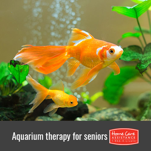 Aquarium Benefits for Elders