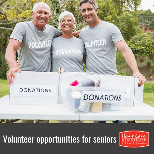 Fun Volunteer Opportunities for Seniors in Harrisburg, PA
