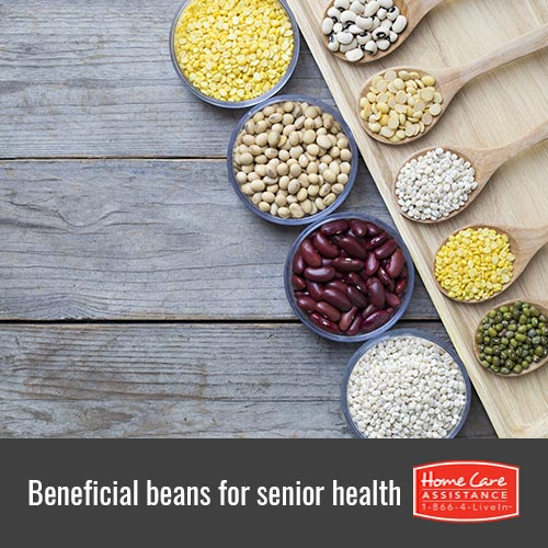Beans That Benefit Senior Health in Harrisburg, PA